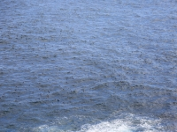 iles-feroe-macareux (21)