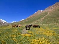kirghizistan-0952